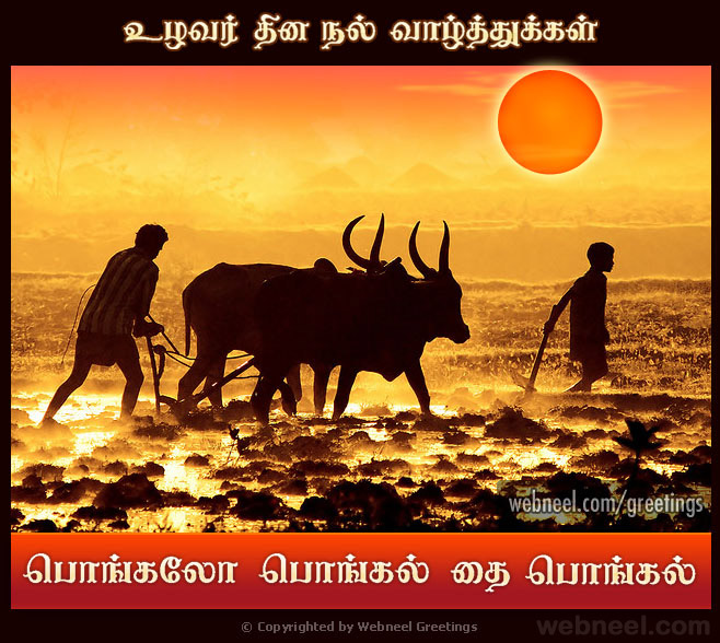 25 beautiful pongal greeting cards and design ideas in tamil pongal greetings card design m4hsunfo