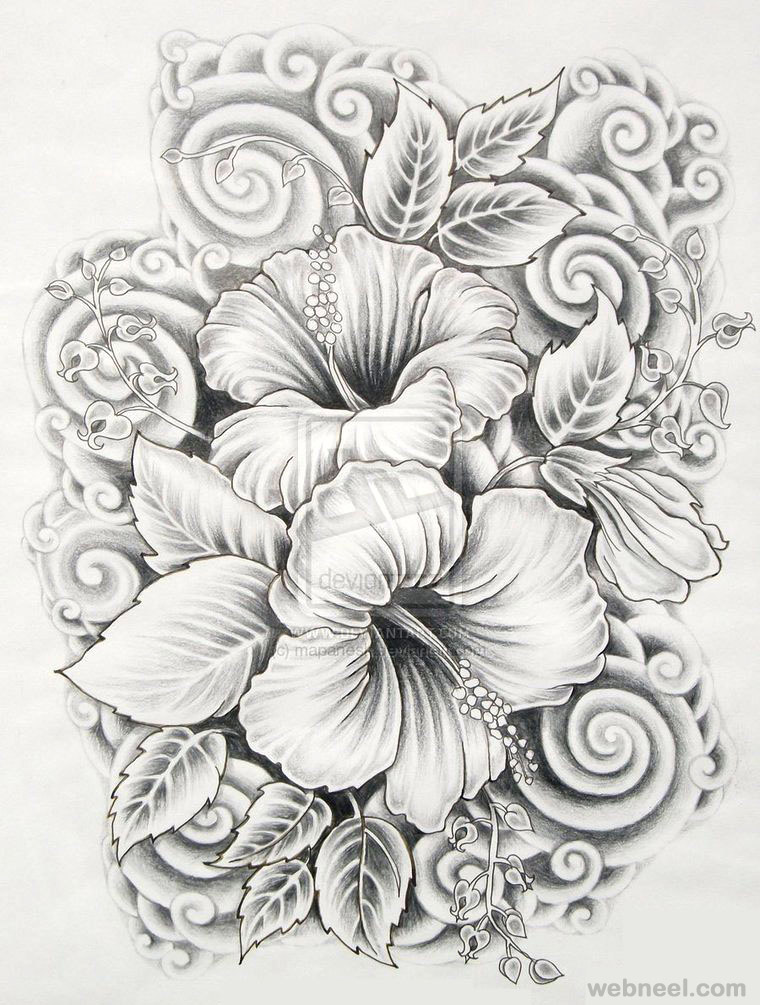 Hibiscus drawings of flowers