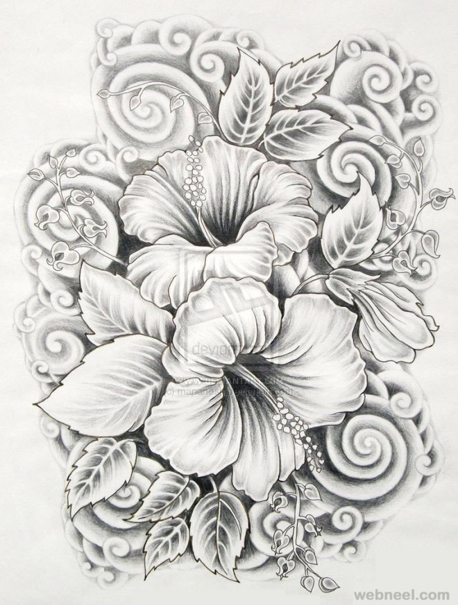 Drawings of flowers hibiscus