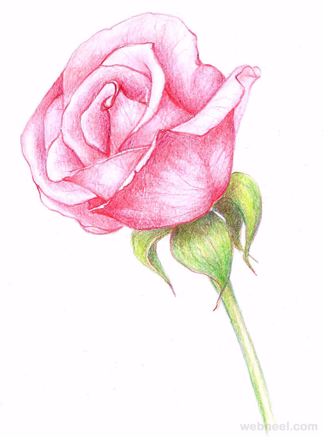 Drawing flowers rose 23