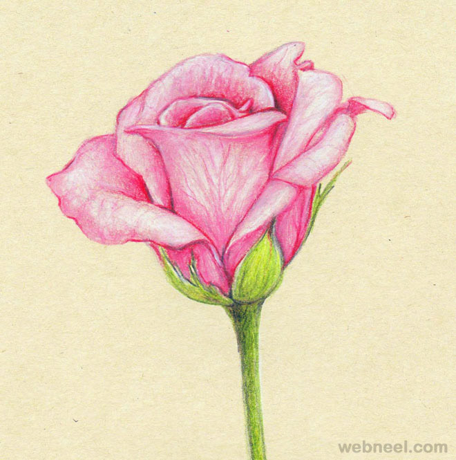 25 beautiful rose drawings and paintings for your inspiration flower drawings rose flower drawing ccuart Image collections