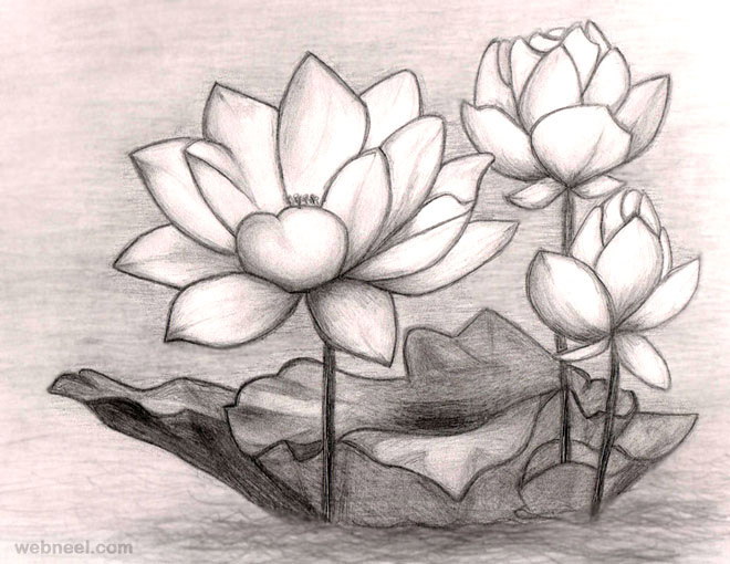 Flower drawings pencil
