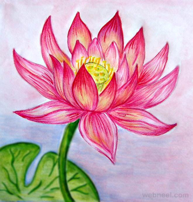 Drawings of flowers lotus