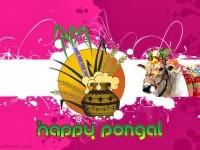 9-pongal-greetings