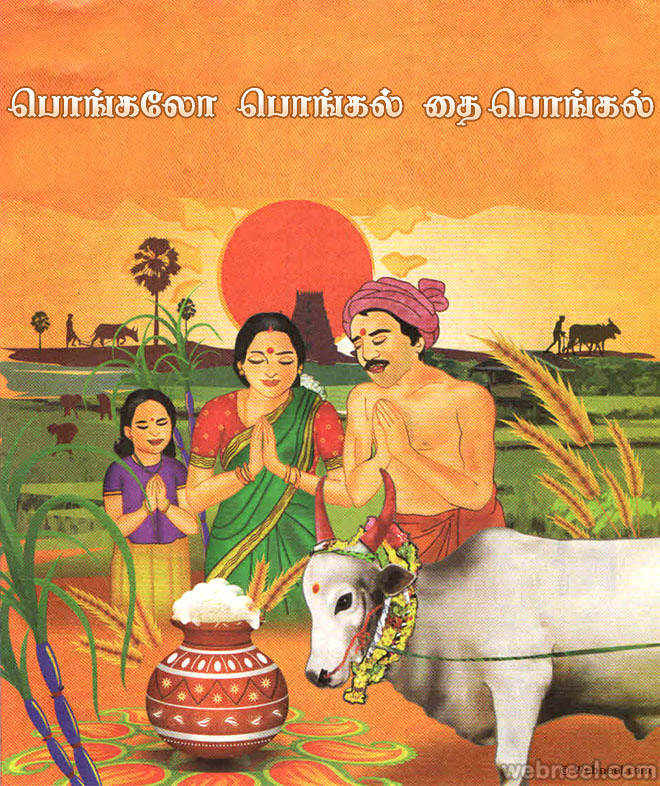 sankranti festival essay Essays pongal festival pongal is the biggest harvest festival of tamil nadu pongal festival is celebrated on 14th of january every year according to hindu calendar.