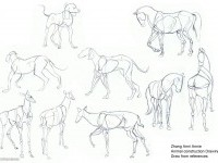 10-how-to-draw-animals