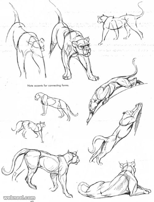 25 beautiful animal drawings for your inspiration how to for Drawing websites that you can draw on