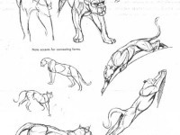 12-how-to-draw-animals