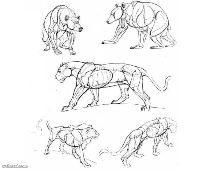 How to draw animal drawings how to draw animals