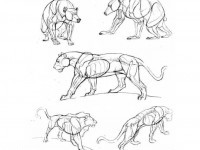 13-how-to-draw-animals