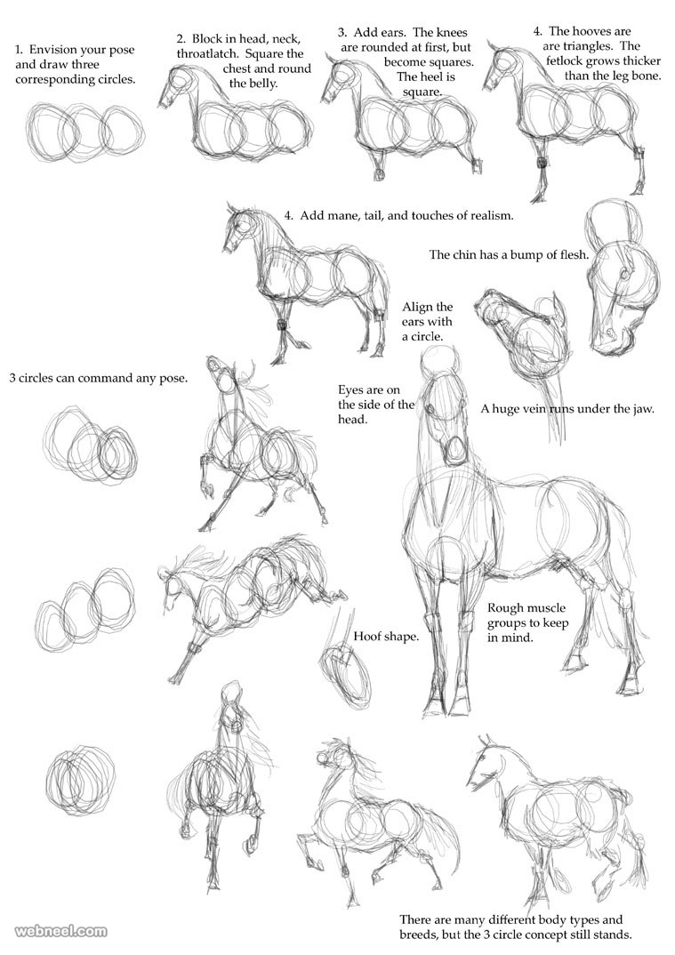 how to draw animals horse