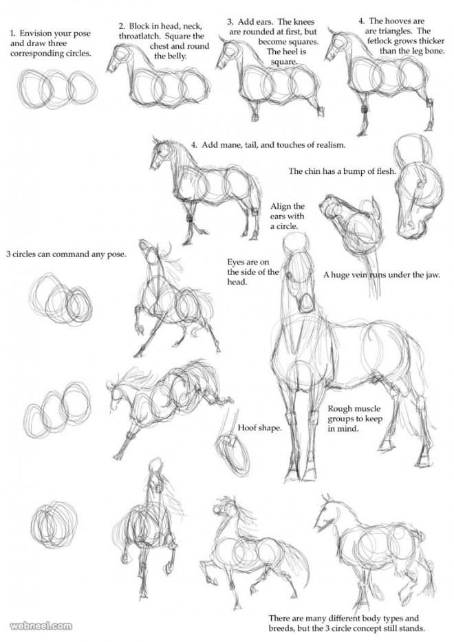 Gallery For gt Step By Drawing Realistic Animals