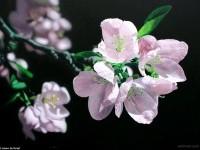 3-acrylic-painting-flower