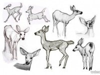 3-how-to-draw-animals-deer