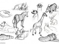 6-how-to-draw-animals