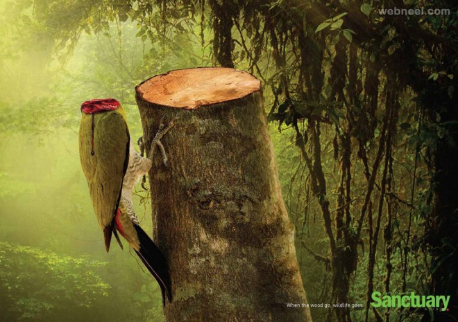 deforestation advertising