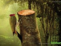 11-deforestation-ads-creative-advertising