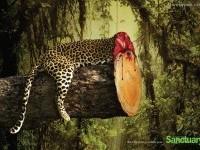 12-deforestation-ads-creative-advertising