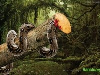 13-deforestation-ads-creative-advertising
