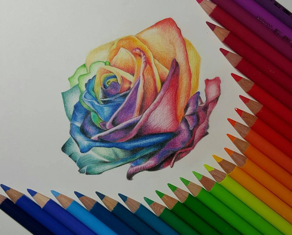 Pencil Drawings Colour