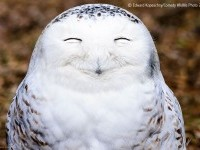 12-laughing-owl-comedy-wildlife-photography-by-edward-kopeschny