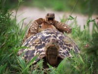 14-happy-tortoise-comedy-wildlife-photography-by-brenden-simonson