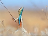 19-musician-comedy-wildlife-photography-by-anup-deodhar