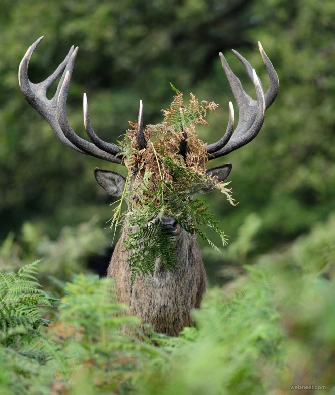 deer comedy wildlife photography by william richardson