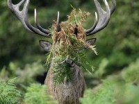 2-deer-comedy-wildlife-photography-by-william-richardson