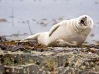 5-seal-comedy-wildlife-photography-by-julie-hunt