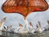 1-best-wildlife-photography-pelikan