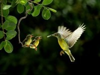 10-best-wildlife-photography