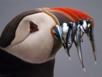13-best-wildlife-photography