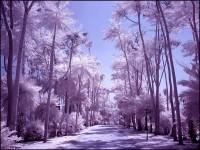 14-palm-infrared-photography-michi-lauke