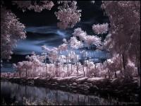 16-tropical-garden-infrared-photography