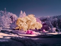 18-infrared-photography