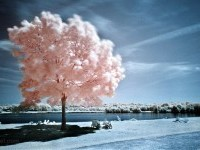 20-infrared-photography