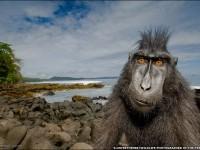 24-best-wildlife-photography