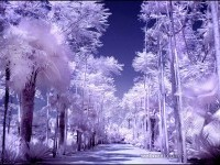 25-infrared-photography