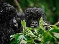 29-best-wildlife-photography