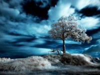 5-infrared-photography
