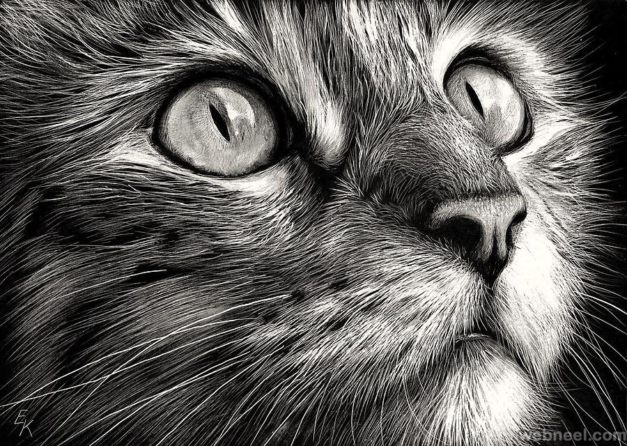 Cat drawing · cat drawing