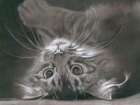 10-cat-drawings