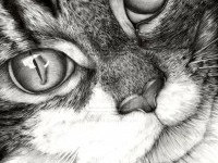 12-realistic-cat-drawing
