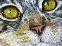 15-cat-color-pencil-drawing-michelle