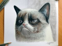 17-cat-color-pencil-drawing-atomiccircus