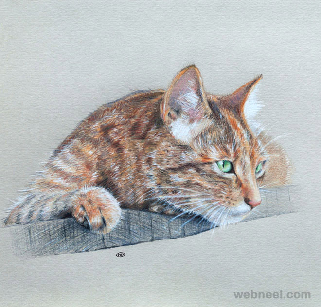 cat color pencil drawings