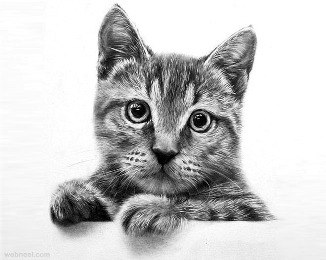 Pencil Drawings Cats