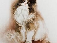 20-cat-color-pencil-drawing
