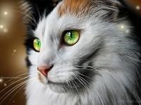22-cat-painting